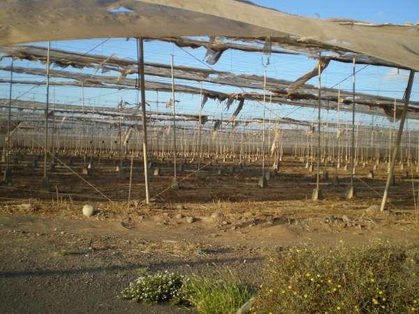Gemüseanbau Spanien