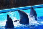 Delfine Gran Canaria