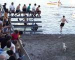 Bous a la Mar Denia, Spanien. Kühe ins Meer.