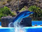 Delfinarium Palmitos Park