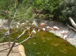 Flamingos Palmitos Park