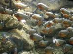 Aquarium Loropark auf Teneriffa