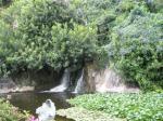 Grüne Oase im Loro Parque